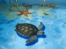 Мозаичный рисунок в бассейне